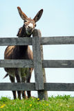 Donkey scratching its face on a wooden fence Stock Photos