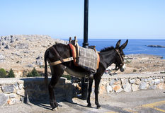 Donkey and sea. A little donkey in a greek street in face to the sea Stock Photo