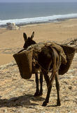 Donkey and sea Stock Photos