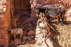 A donkey and a sheep in a mountain village Stock Images