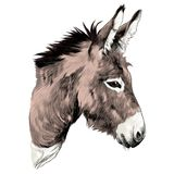 Donkey sketch vector. Graphics color picture head vector illustration
