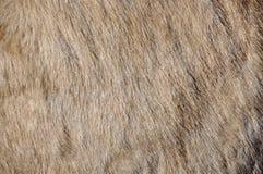 Donkey skin Royalty Free Stock Photo