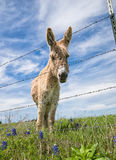 Donkey on spring pasture Stock Images