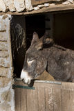 Donkey in Stable Stock Images