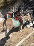 Donkey Stairs Travel Santorini. Greece Animal Summer Hot Stock Photography