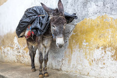 Donkey standing in an alley, Morocco Royalty Free Stock Images