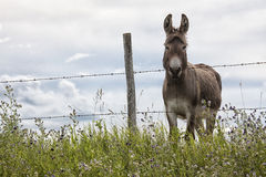 Donkey standing at the fence Stock Image