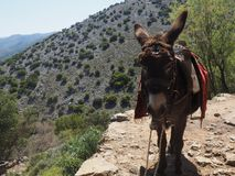 A donkey standing on a rock on a mountain trail, while a group of people with big backpacks are hiking. royalty free stock images