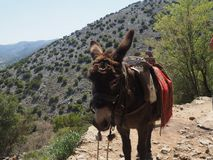 A donkey standing on a rock on a mountain trail, while a group of people with big backpacks are hiking. royalty free stock image