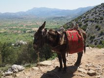 A donkey standing on a rock on a mountain trail, while a group of people with big backpacks are hiking. royalty free stock photography