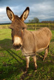 Donkey standing in the sun Stock Photo