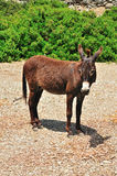 Donkey stands on a background of green bushes Stock Photography