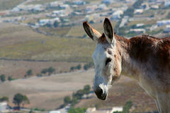 A donkey stands on a hillside Stock Photography
