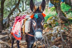 Donkey stands on the mountain path to Zeus Cave - Lassithi, Crete, Greece. Donkey stands on the mountain path to Zeus Cave Diktaion Andron - Lassithi, Crete stock photography