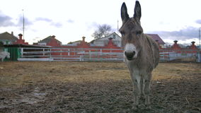 Donkey stay and show affection. In the zoo stock video footage