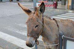 Donkey in the street. A donkey in the street Royalty Free Stock Image