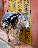 The donkey on the street of Fes Stock Photos