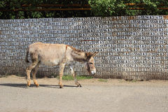 The donkey in the streets of the Vank village Stock Image
