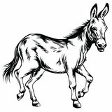 Donkey Stylized Drawing Illustration. Vector Royalty Free Stock Image