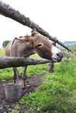 Donkey in the summer aviary. Royalty Free Stock Image