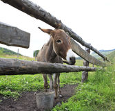 Donkey in the summer aviary. Royalty Free Stock Photo