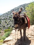 A donkey in summer mountains, the Greek island of Crete stock images