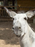 Donkey. Sympathetic donkey. Zoo Madrid.  Spain Stock Photo