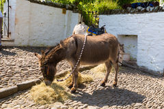 Donkey takes a rest during July heatwave in England at Clovelly Devon. CLOVELLY, DEVON, UNITED KINGDOM -JULY 14th 2013: The July heatwave in England saw tourists Stock Image