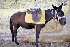 Donkey Taxi Royalty Free Stock Photo