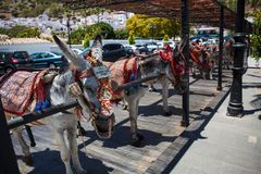Donkey taxi. Famous donkey taxi in Mijas village. Costa del Sol, Andalusia, Spain. Picture taken 20 june 2019 royalty free stock photos