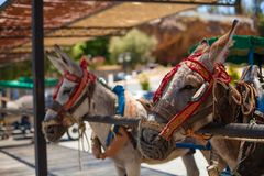 Donkey taxi. Famous donkey taxi in Mijas village. Costa del Sol, Andalusia, Spain. Picture taken 20 june 2019 royalty free stock images