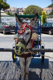 Donkey taxi. Famous donkey taxi in Mijas village. Costa del Sol, Andalusia, Spain. Picture taken 20 june 2019 stock photo