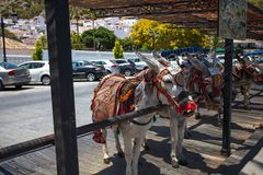 Donkey taxi. Famous donkey taxi in Mijas village. Costa del Sol, Andalusia, Spain. Picture taken 20 june 2019 royalty free stock photo