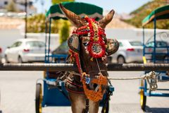 Donkey taxi. Famous donkey taxi in Mijas village. Costa del Sol, Andalusia, Spain. Picture taken 20 june 2019 stock photography