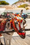 Donkey taxi. Famous donkey taxi in Mijas village. Costa del Sol, Andalusia, Spain. Picture taken 20 june 2019 stock image
