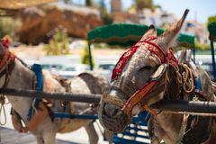 Donkey taxi. Famous donkey taxi in Mijas village. Costa del Sol, Andalusia, Spain. Picture taken 20 june 2019 stock images