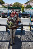 Donkey taxi. Famous donkey taxi in Mijas village. Costa del Sol, Andalusia, Spain. Picture taken 20 june 2019 royalty free stock image