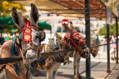 Donkey taxi. Famous donkey taxi in Mijas village. Costa del Sol, Andalusia, Spain. Picture taken 20 june 2019 stock photos