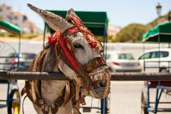 Donkey taxi. Famous donkey taxi in Mijas village. Costa del Sol, Andalusia, Spain. Picture taken 20 june 2019 royalty free stock photography