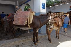 Donkey taxi in Lindos, Greece. Lindos, Greece - October 11, 2017: People at the main station of donkey taxi. Using donkey taxi to Acropolis is a must do in Stock Images