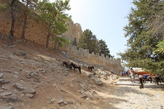 Donkey taxi in Lindos Rhodes island, Greece Royalty Free Stock Image