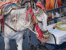 Donkey Taxi in Mijas in Southern Spain Stock Photography