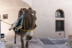 Donkey taxi in Santorini, Cyclades Islands, Greece. Europe Stock Photography