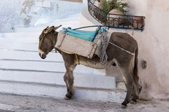 Donkey taxi in Santorini, Cyclades Islands, Greece Royalty Free Stock Photography
