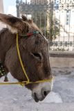 Donkey taxi in Santorini, Cyclades Islands, Greece Stock Photo