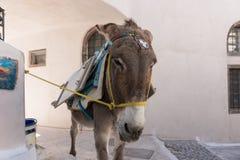 Donkey taxi in Santorini, Cyclades Islands, Greece. Europe Royalty Free Stock Photos