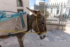 Donkey taxi in Santorini, Cyclades Islands, Greece. Europe Stock Image