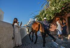 Donkey taxi in Santorini Island, Greece. Santorini, Greece - Oct 4, 2018. Donkey taxi on stone road with flowers in Santorini Island, Greece royalty free stock photo