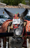 Donkey Taxi. Spain. Royalty Free Stock Photography