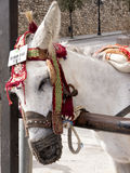 Donkey Taxis in Mijas one of the most beautiful 'white' villages Royalty Free Stock Image